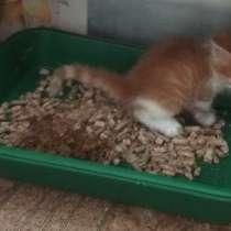 Красивые котята 1,5 месяца, в Москве