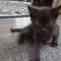 Отдам котенка+подарок лоток, в г.Павлодар