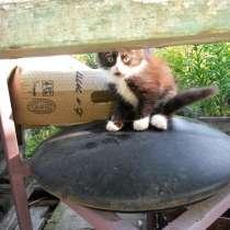 Котята даром, в Березовский