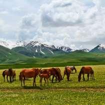 Сдается дача в аренду! Суусамыр, урочище Каракол, кумысолеч, в г.Бишкек
