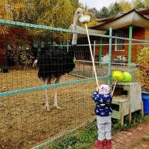 Мини ферма Страус страусиная ферма, в Мытищи