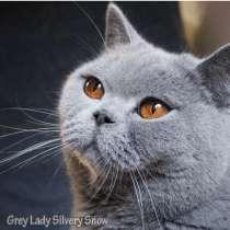 Взрослая британская кошка в добрые руки, в Москве