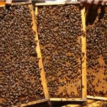 Пчелы, в г.Луганск