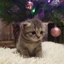 Британские котята, в г.Херсон