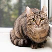 Юная кошка Анфиса ищет ответственных хозяев!, в Москве