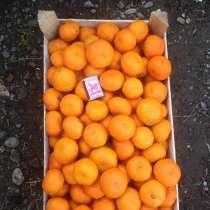 Абхазские мандарины оптом, в г.Сухум