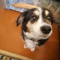 Собака-дворняга, в Усть-Илимске