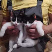 Котята в добрые руки, в Бологом