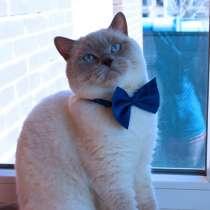 Шикарный молодой Британский кот Шоу-класса, в г.Астана
