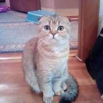 Продам кошку, в г.Донецк