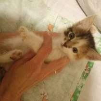Отдам котёнка в добрые руки, в Твери