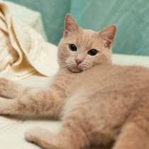 Ладненький красавчик кот Филя ищет дом, в Москве