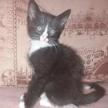 Котята, в Перми