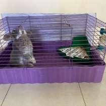 Продам кролика, в Череповце