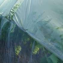 Инновационная технология выращивания винограда в июле месяце, в Севастополе