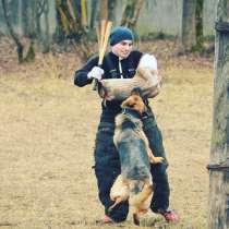 Дрессировка собак, в Подольске
