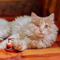 Рыжий котик Мокки с одним глазиком ищет дом, в Москве