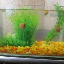 Продам аквариум, в Набережных Челнах