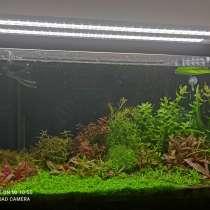 Растения для аквариума, в Екатеринбурге