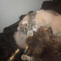 Милые котятки, в Оренбурге