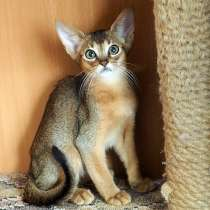 Абиссинские котята из питомника. Доставка!, в г.Бишкек