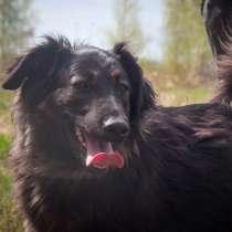 Ирма - собака в добрые руки, в Москве