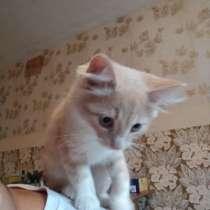 Котёнок, в Нижнем Новгороде