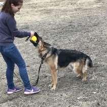 Дрессировка собак, в Иркутске