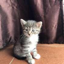Котята, в Сходне