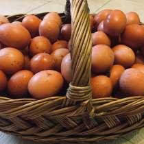 Яйца домашние, в Домодедове
