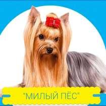 Стрижка собак и кошек, в Новороссийске