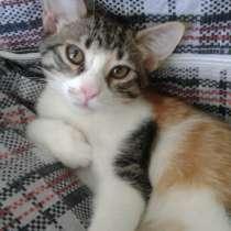 Домашние котята, папа - бенгал, в добрые руки, в Севастополе