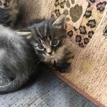 В дар котята, в Зеленограде