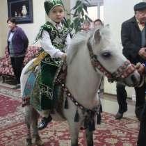 Пони на сундет той, в г.Алматы