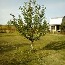 Обрезка деревьев и кустарников, в Энгельсе