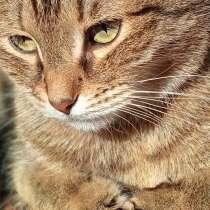 Отдам в добрые руки котенка, в Нижнем Новгороде