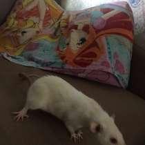 Крысы с клеткой, в Кургане