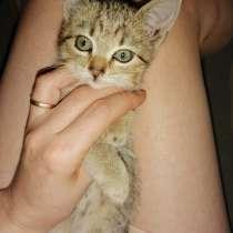 Отдам котенка, в Санкт-Петербурге