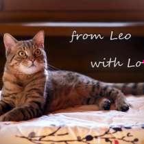 Лео - красивый молодой полосатый кот в добрые руки, в Москве