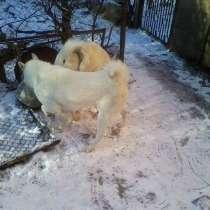 Охотничьи собаки, консультации по воспитанию и документам, в Ростове-на-Дону