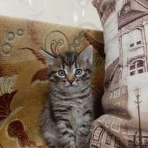 Котенок девочка, в г.Жлобин