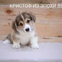 Продам щенков корги, в Воронеже