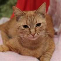 Рыжая кошка в добрые руки, в Москве