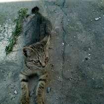 Худой и голодный, блохастый кот, в Новочеркасске