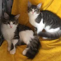 Котята Сема и Сеня ищут дом, в Москве