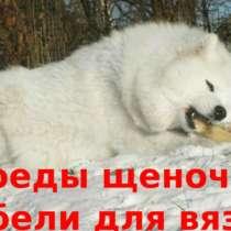 Самоеды щенки и кобели для вязки, в Нижнем Новгороде