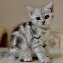 Котята приучены к лотку очень красивые с хорошей родословной, в г.Алматы