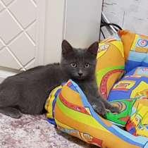 Котенок, в Уфе