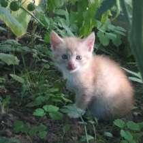 Котята в ищут дом, в г.Полоцк