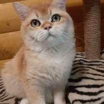 Молодой котик, в Ивантеевка